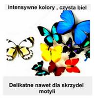 Motyle różnych kolorów i kształtów